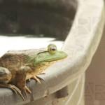 ARK_Bullfrog